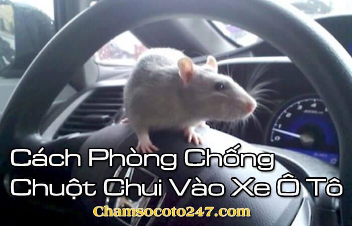 Cach-phong-chong-chuot-chui-vao-xe-o-to-hieu-qua-1